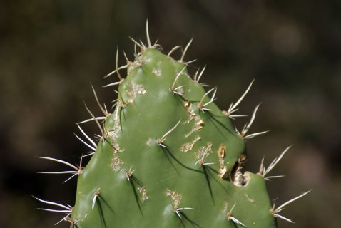 Cactus - San Marcos Sierra - Argentina
