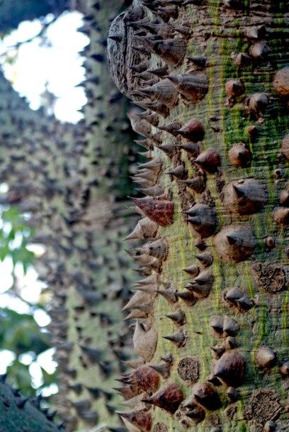 Detalle tronco arbol - Argentina