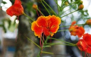 flor-casa-rodrigao