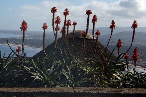 flor-en-cerro-san-antonio02