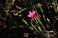 flor-en-represa