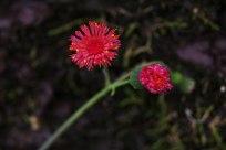 flor-en-serra-do-rio