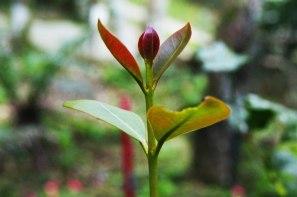flor-naciendo