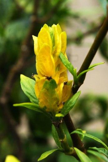 flor-rio-pardo