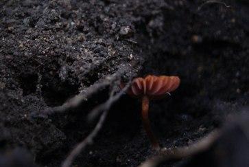 hongos-en-cerro-pan-de-azucar-uruguay-02