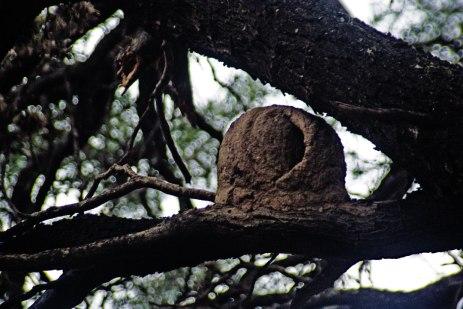 Nido del pájaro Hornero - San Marcos Sierra - Argentina