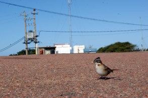 Pájaro en la calle