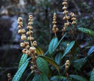 Flores - Capao do Leao - Brasil