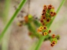 planta-medicinal2