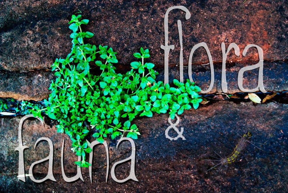 portada-flora-&-fauna