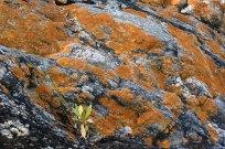 Musgo sobre piedras - San Marcos Sierra - Argentina