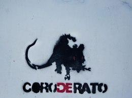 coro-do-rato