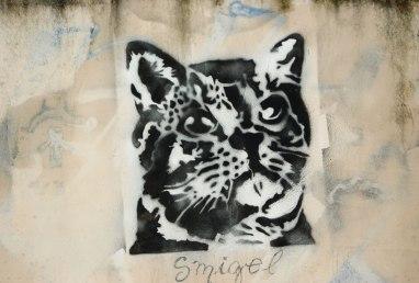 gato-miguel
