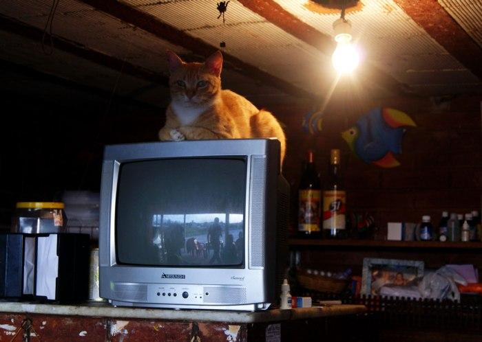 gato-gardfiel