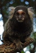 macaco-187