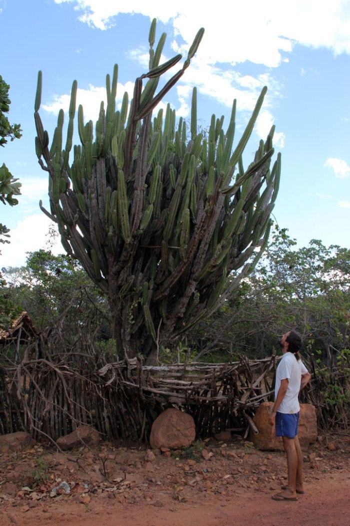 gran-cactus-gran